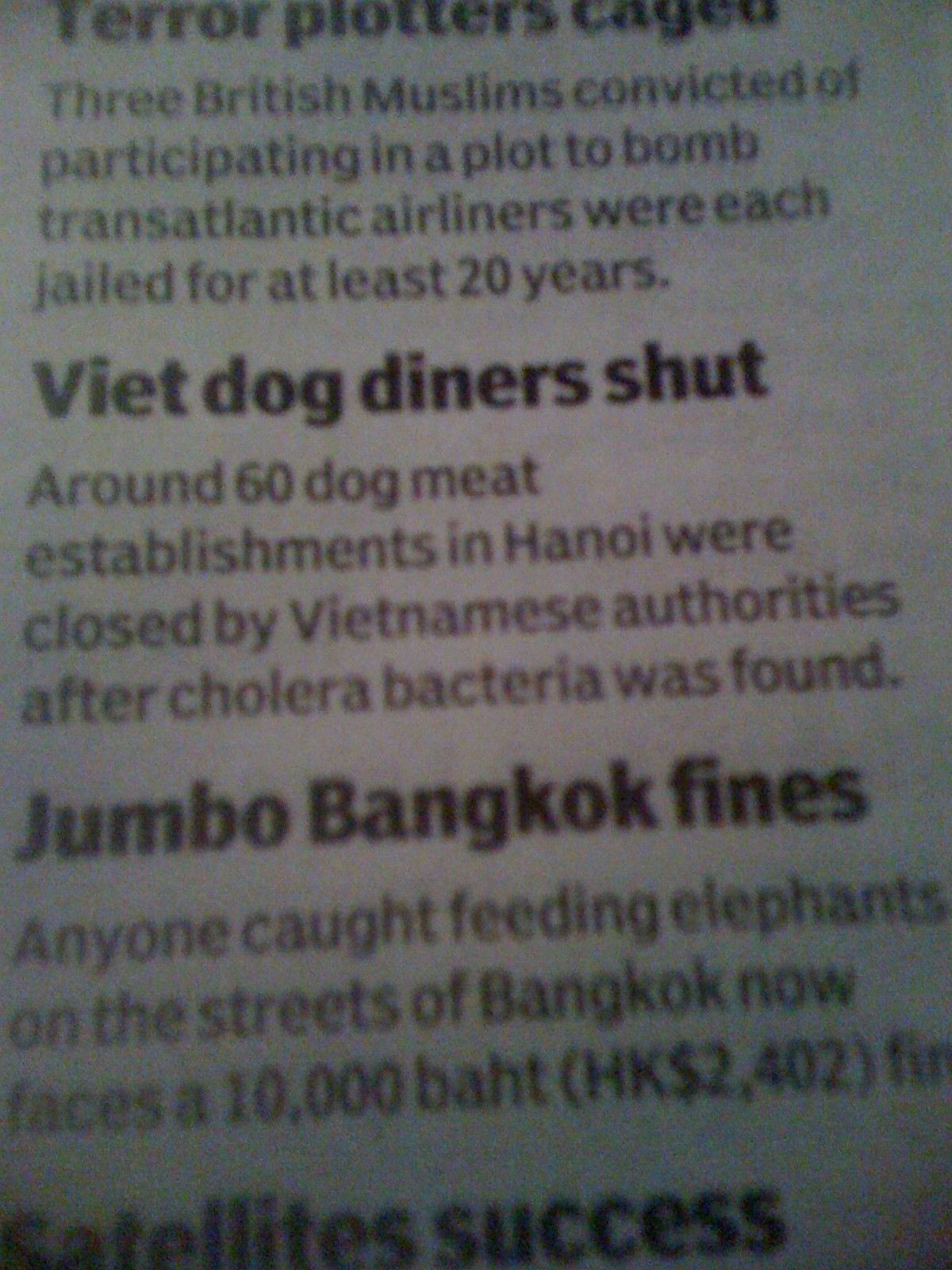 Don't be a dog in Vietnam