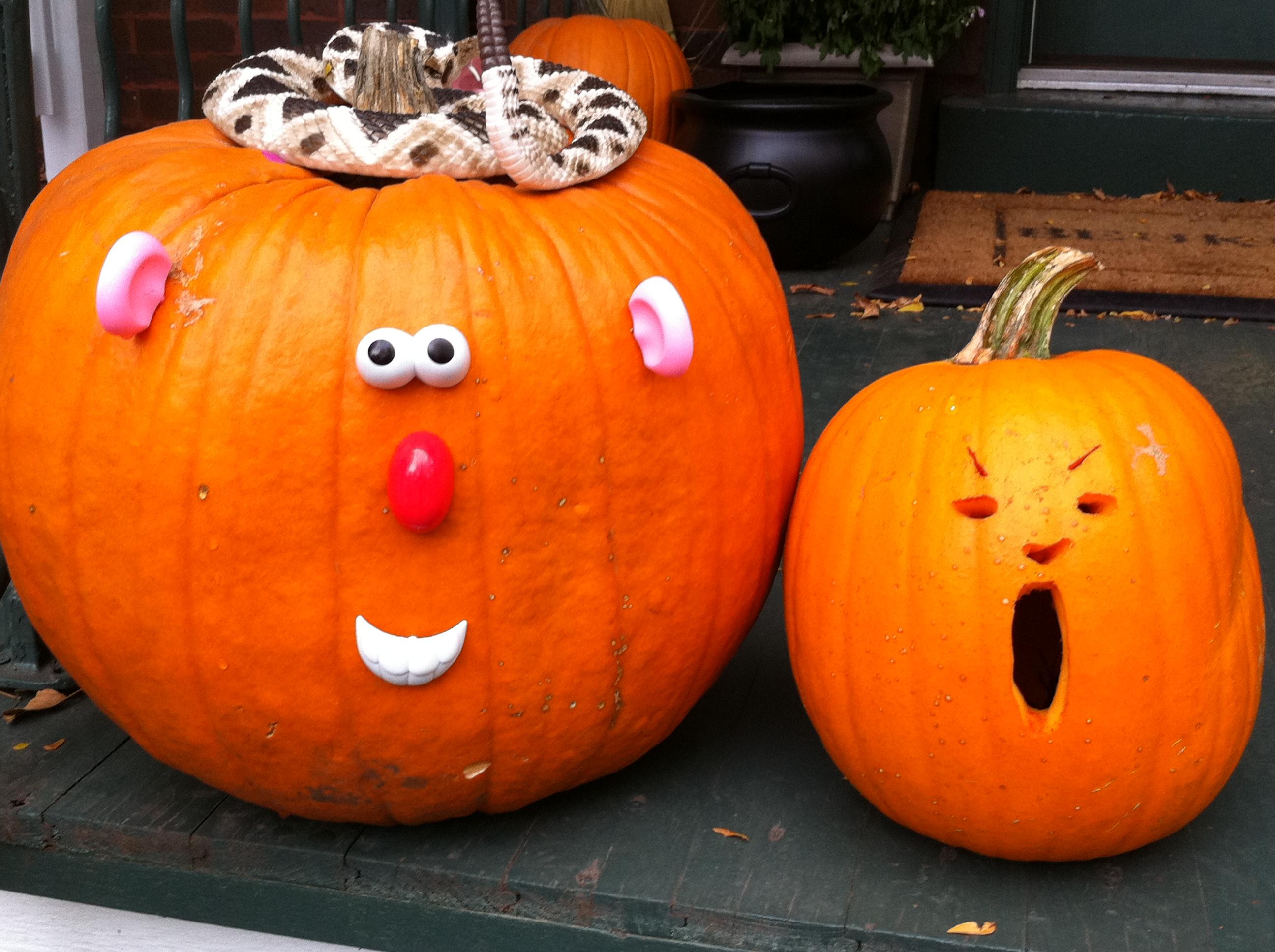 Mr. Potato Pumpkin