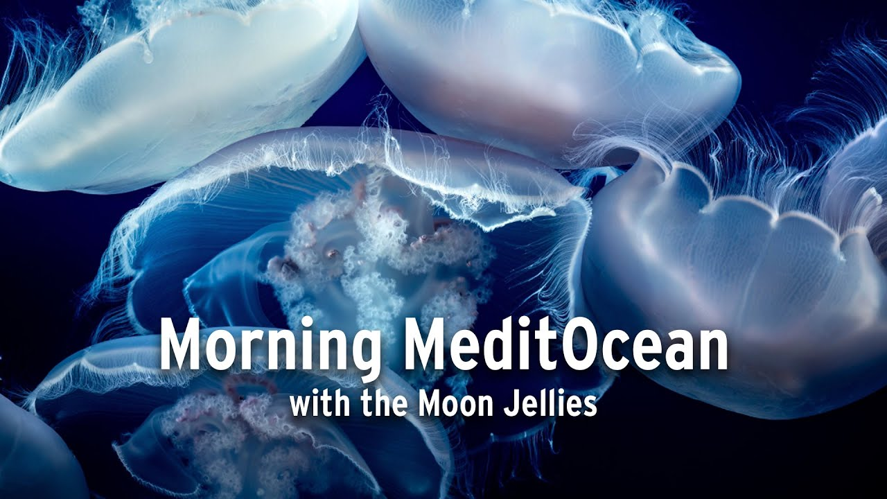 Meditation with the Moon Jellies